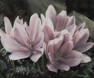 colchicum2.jpg - 50 x 60 cm   oil tempera on canvas  2008               Foto: Barbara Wolters : copyright