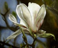 magnolia1.jpg - 50 x 60 cm   oil tempera on canvas  2009             Foto : Barbara Wolters- copyright